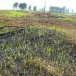 Difference Between Shifting Cultivation and Nomadic Herding