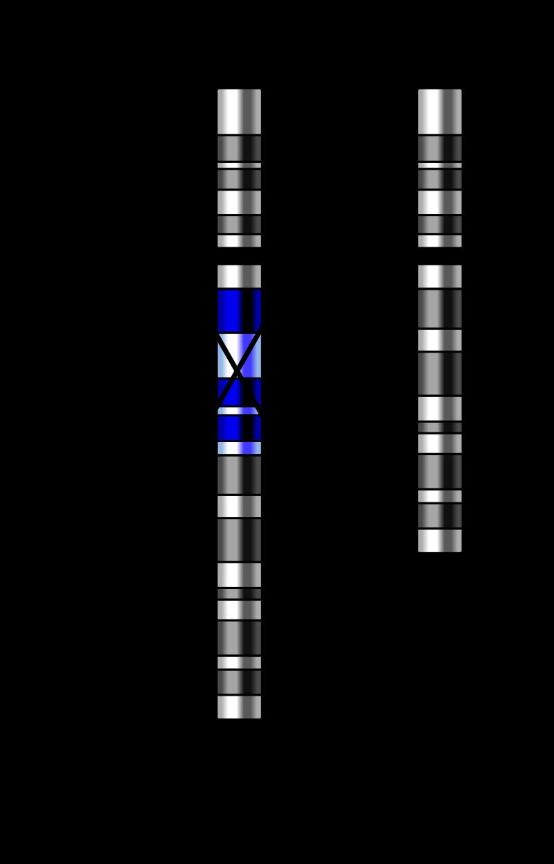 Substitution Mutation vs Insertion Mutation vs Deletion Mutation