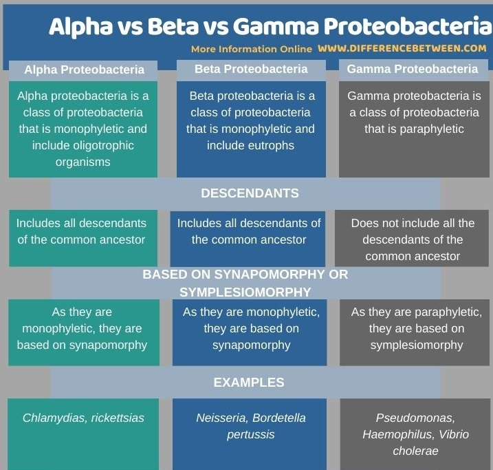Difference Between Alpha Beta and Gamma Proteobacteria in Tabular Form