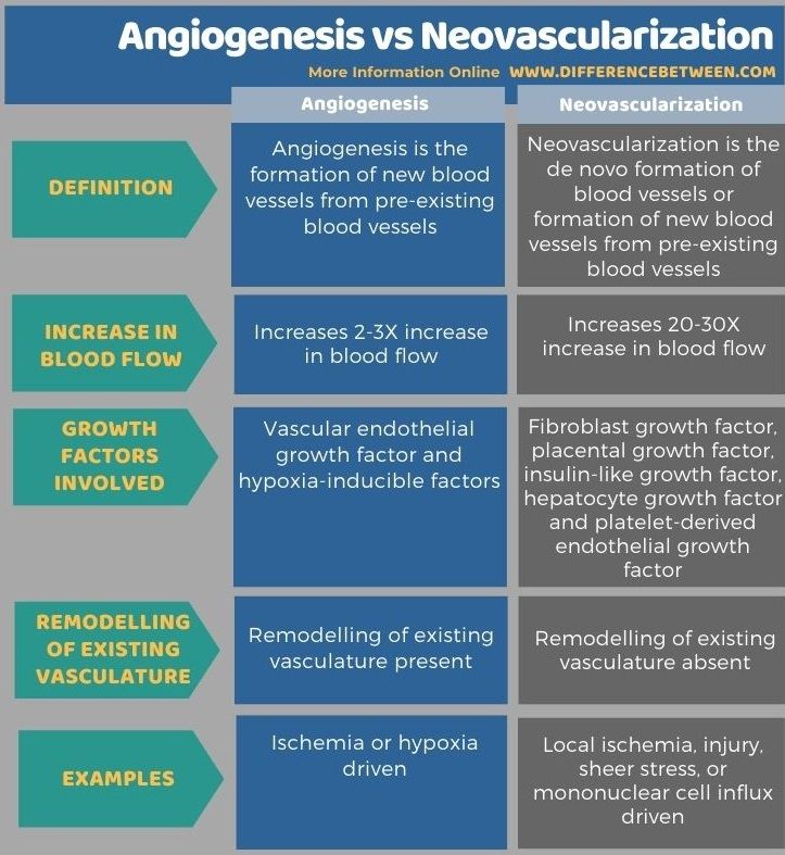 Difference Between Angiogenesis and Neovascularization in Tabular Form
