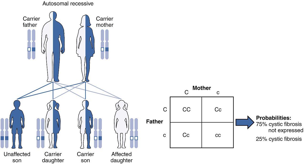 Key Difference - Autosomal Dominant vs Autosomal Recessive Disorders