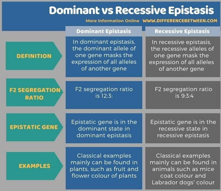 Difference Between Dominant and Recessive Epistasis in Tabular Form
