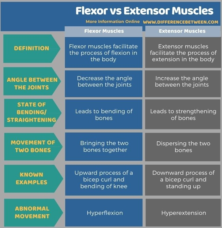 Difference Between Flexor and Extensor Muscles in Tabular Form