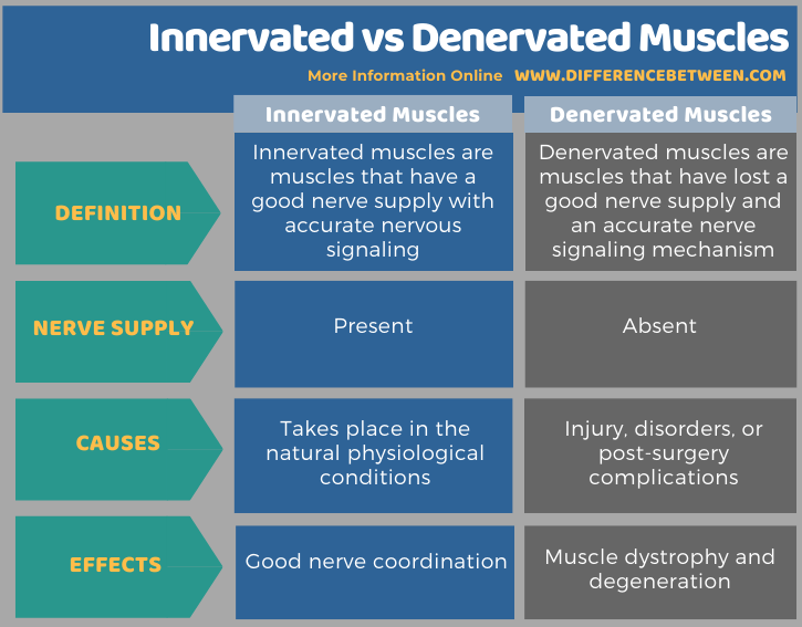 Difference Between Innervated and Denervated Muscles in Tabular Form