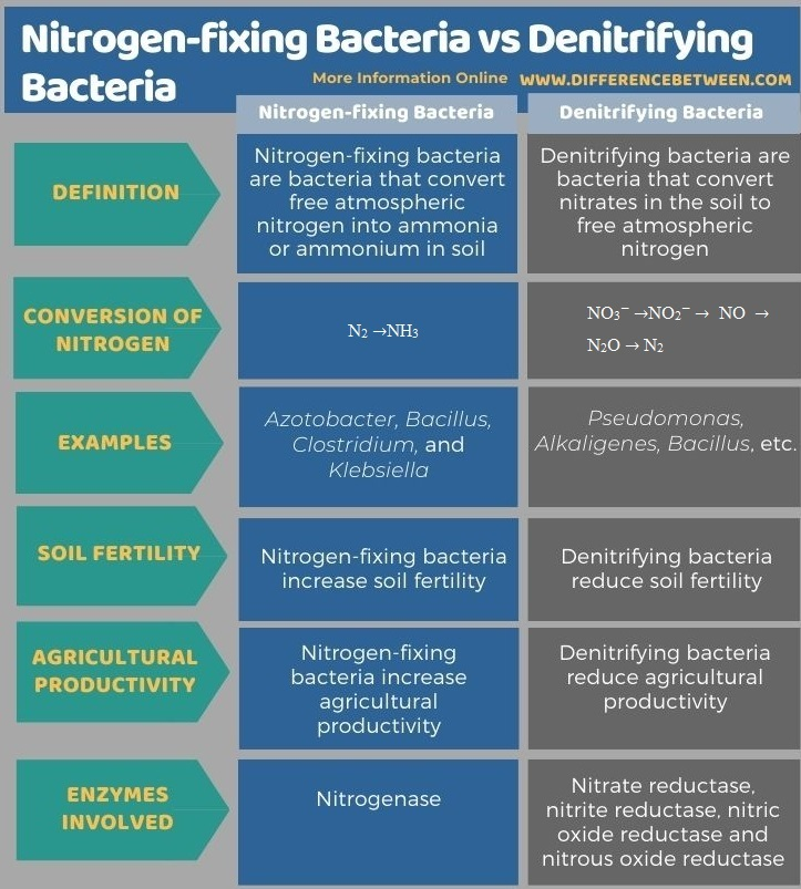 Difference Between Nitrogen-fixing Bacteria and Denitrifying Bacteria - Tabular Form