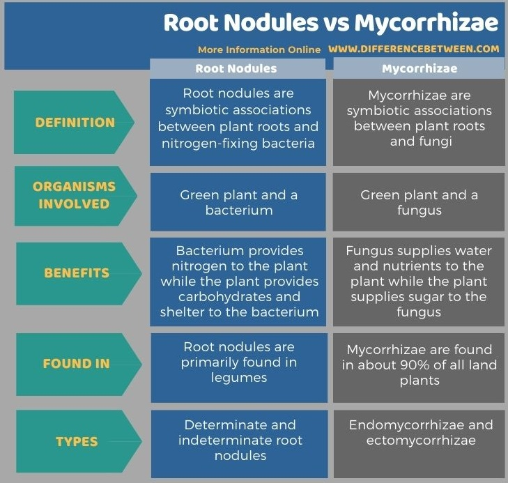 Difference Between Root Nodules and Mycorrhizae in Tabular Form