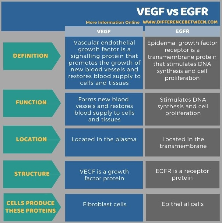 Difference Between VEGF and EGFR in Tabular Form