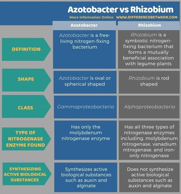 Difference Between Azotobacter and Rhizobium in Tabular Form
