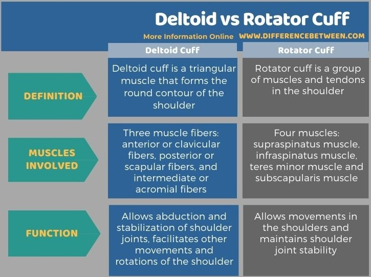 Difference Between Deltoid and Rotator Cuff in Tabular Form