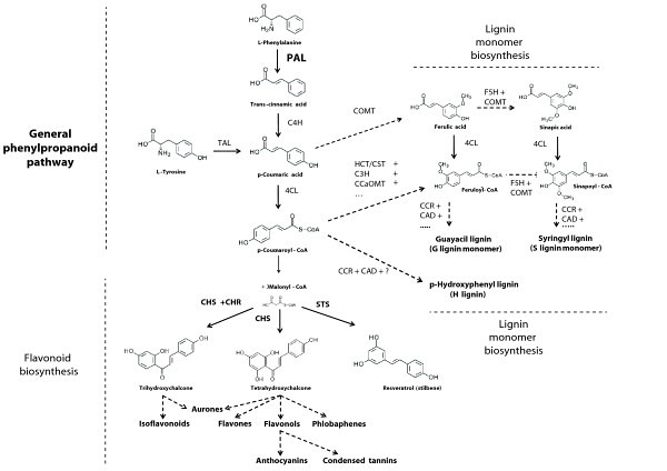 Difference Between Flavonoids and Isoflavonoids