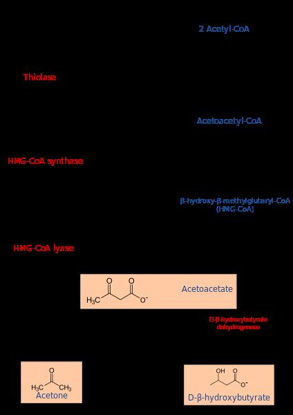 Key Difference - Ketosis vs Ketogenesis