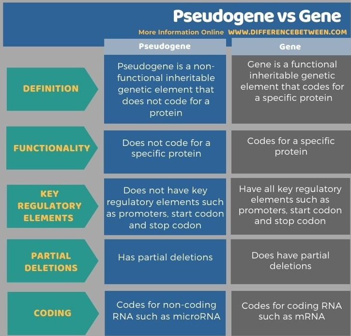 Difference Between Pseudogene and Gene in Tabular Form
