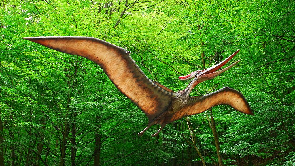 Illustration of Pteranodon